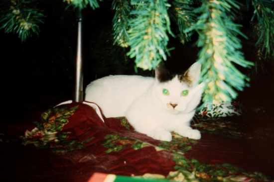 He wasn't one of those cats who climbed Christmas trees - he just liked to hide under them (from dogs, cameras, and clumsy humans).